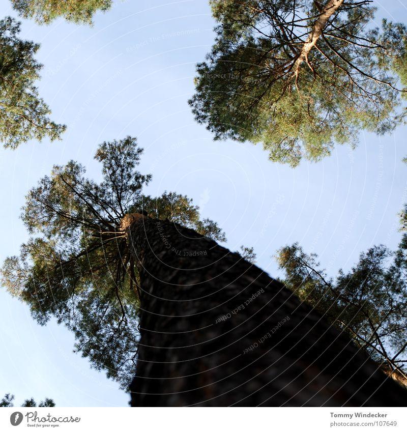 Herbstwald Himmel Natur blau grün Baum Pflanze Sommer Blatt Wolken Einsamkeit Wald Landschaft Park braun Wachstum