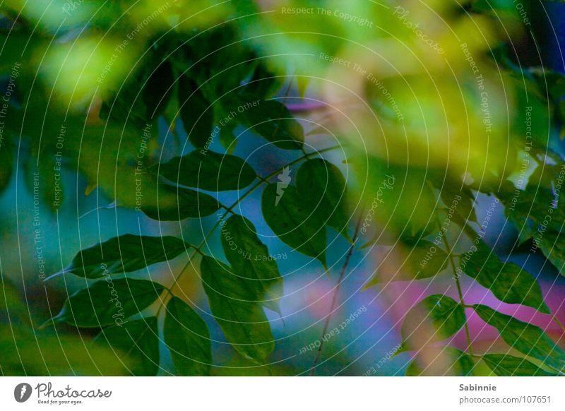Gestern im Garten... blau grün Baum Pflanze Sommer Blatt Sträucher violett Efeu
