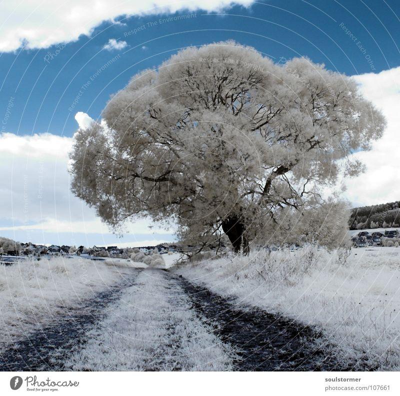 A new tree Himmel blau weiß Baum Blatt Wolken schwarz Berge u. Gebirge Gras Wege & Pfade grau Erde Ast Rasen Hügel Surrealismus