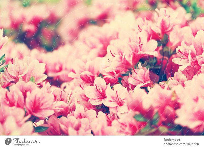 j'aime les fleurs.................... Natur Pflanze schön weiß Sommer Umwelt Wärme Reisefotografie Blüte Frühling rosa Sträucher Fröhlichkeit Blühend viele Duft