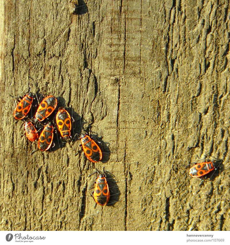 Spalter Baum Einsamkeit Holz Traurigkeit Trauer mehrere Insekt Verzweiflung Käfer Pfosten Baumrinde transpirieren Ausgrenzung Laus Feuerwanze