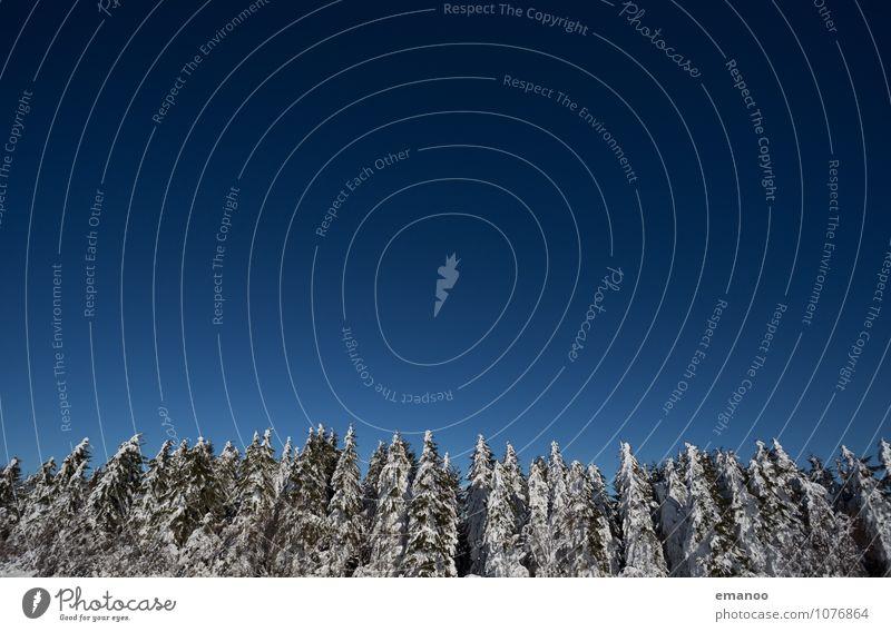 Wintertannen Himmel Natur Ferien & Urlaub & Reisen blau Pflanze weiß Baum Landschaft Ferne Winter Wald kalt Berge u. Gebirge Umwelt Schnee Eis
