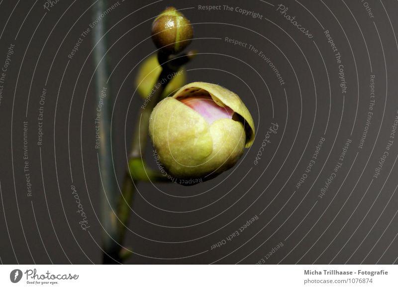 Aufblühen Natur Pflanze Sommer Erholung Blume Umwelt Blüte Frühling Garten Wachstum leuchten Dekoration & Verzierung elegant ästhetisch Blühend Blumenstrauß