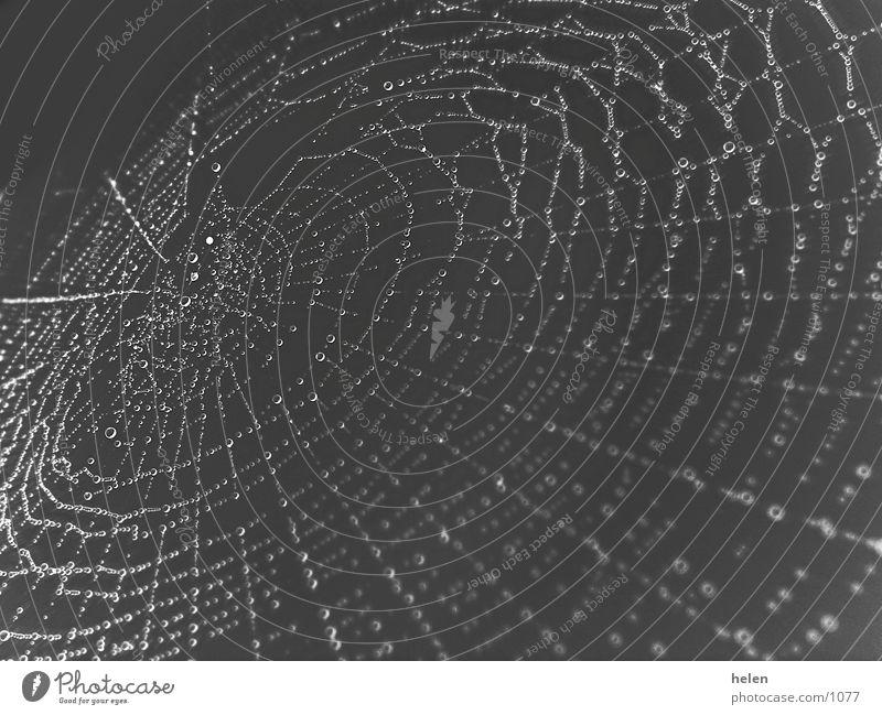 spinnennetz bei nacht Wassertropfen Seil Netz Spinne Spinnennetz
