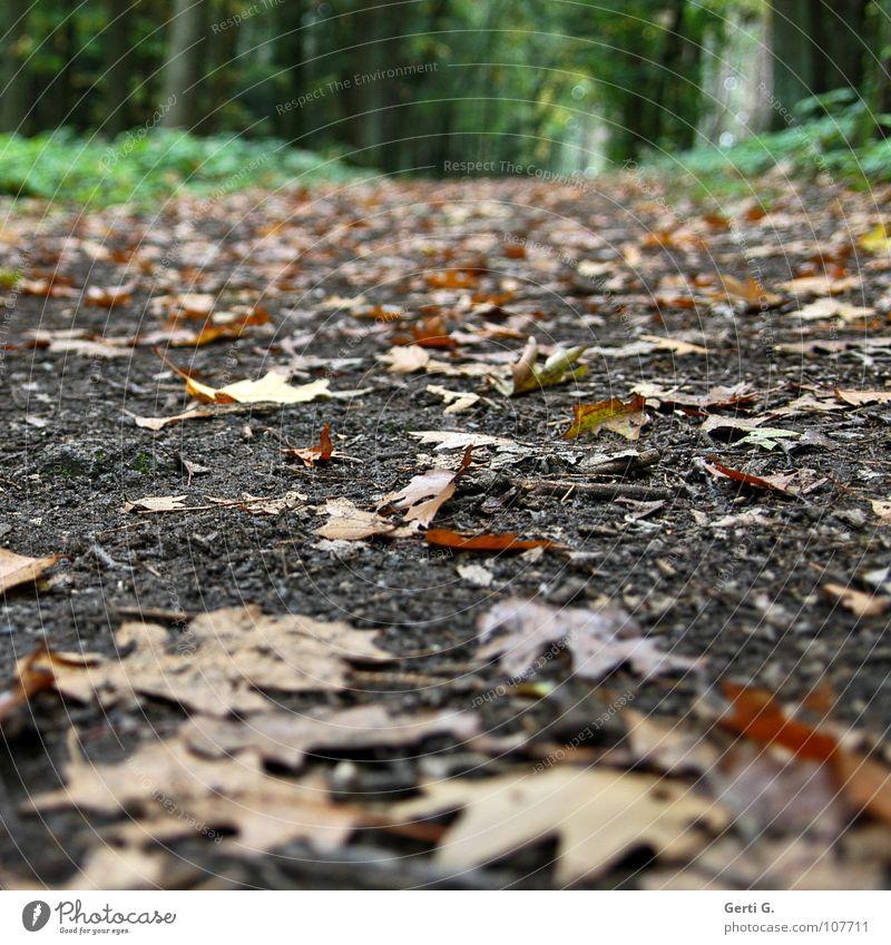WWW Fußweg Herbst aufsteigen Steigung Hügel Wald Heide Blatt fallen Waldboden Waldrand wandern grün saftig frisch Jahreszeiten herbstlich herbstbild
