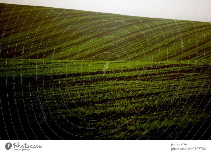 Acker Feld grün Aussaat Hügel Wellen Landwirtschaft braun Nebel Farbe Ernte Linie Erde Bodenbelag