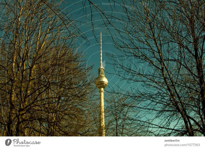 365 Berlin Hauptstadt Berliner Fernsehturm Funktechnik Alexanderplatz Stadtzentrum Frühling Baum Baumstamm Ast Zweig Himmel Textfreiraum Deutschland Wahrzeichen