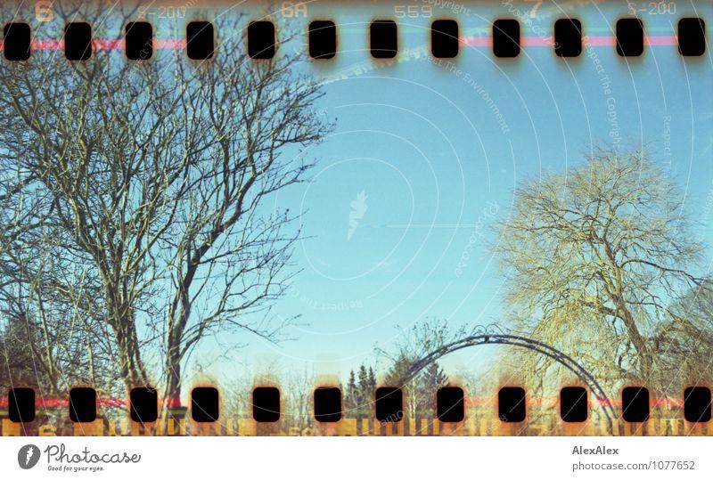 Gartenpanorama mit Himmel blau Pflanze schön Baum Erholung Landschaft ruhig Umwelt Herbst natürlich Stimmung träumen Luft leuchten