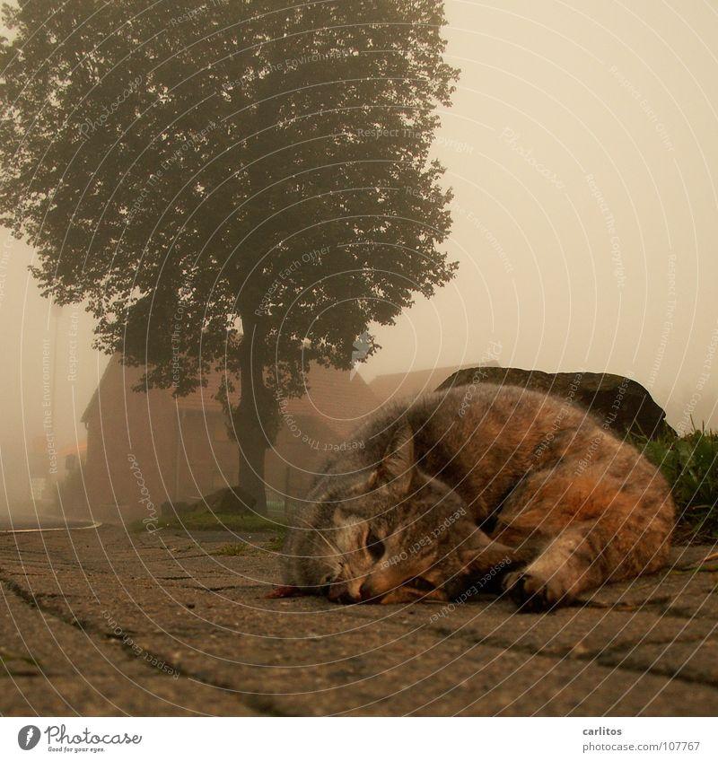 Trauriges Ende einer Nacht Herbst Tod Katze warten Nebel Trauer Vergänglichkeit Verzweiflung Haustier Unfall Hauskatze Straßenrand vermissen Landstraße Desaster
