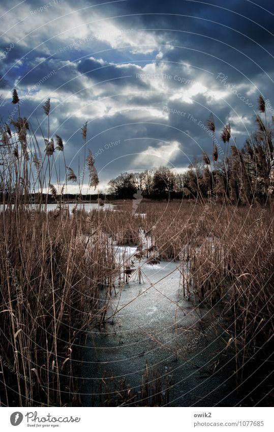 Still und kalt Himmel Natur Pflanze Baum Landschaft ruhig Wolken Winter Ferne kalt Umwelt Horizont Eis Idylle Sträucher warten