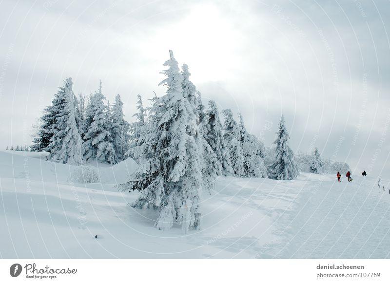 Weihnachtskarte 5 Ferien & Urlaub & Reisen weiß Baum Landschaft Winter Schnee grau Freizeit & Hobby wandern Ausflug Spaziergang geheimnisvoll aufwärts Tanne