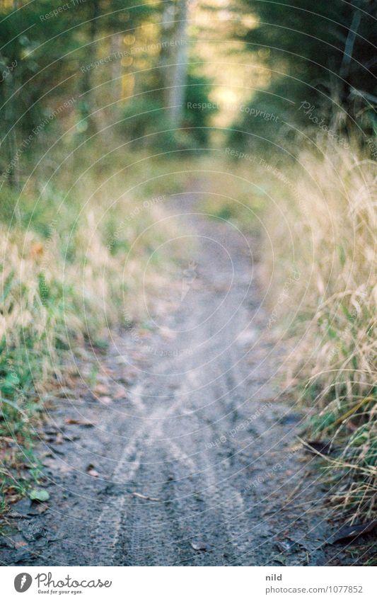 Trail Lifestyle Erholung ruhig Freizeit & Hobby Ausflug Abenteuer Fahrradtour Sport Fahrradfahren Umwelt Natur Pflanze Sommer Herbst Baum Sträucher Wald