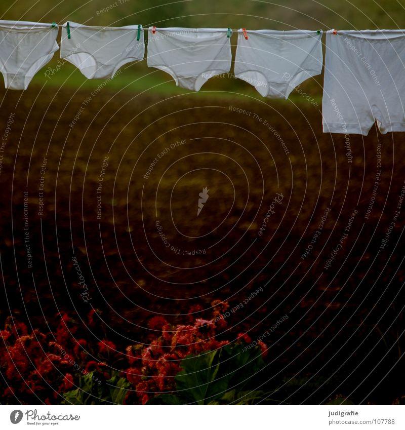 Waschtag weiß Blume Pflanze Farbe Garten Feld Seil Bekleidung Sauberkeit rein festhalten Amerika obskur Unterwäsche Wäsche Unterhose