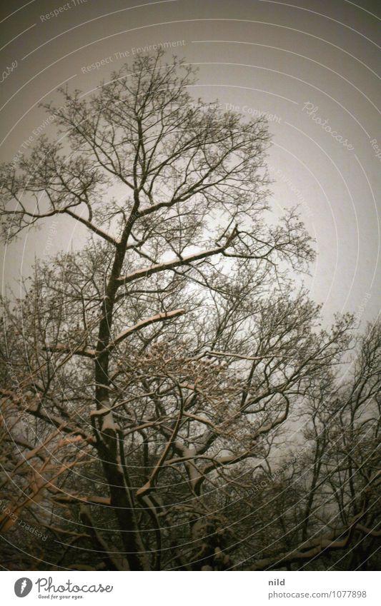 nachts unterwegs Natur Pflanze Himmel Winter Wetter Schnee Schneefall Baum Park Wald Menschenleer dunkel kalt trist grau orange schwarz kahl Farbfoto