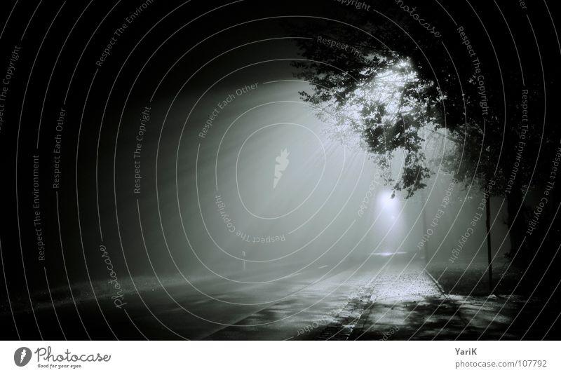 the fog Wasser Baum blau Blatt schwarz Einsamkeit Straße dunkel grau Beleuchtung Nebel nass Asphalt Ast gruselig Laterne