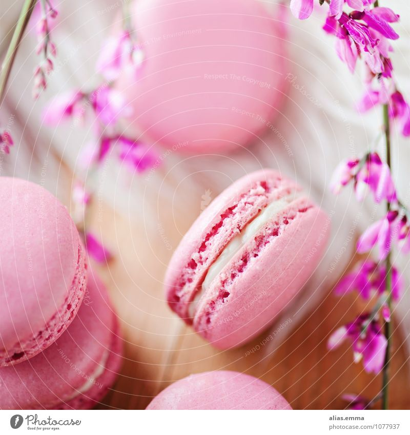 Macarons Lebensmittel rosa rund Süßwaren Dessert Kaffeetrinken