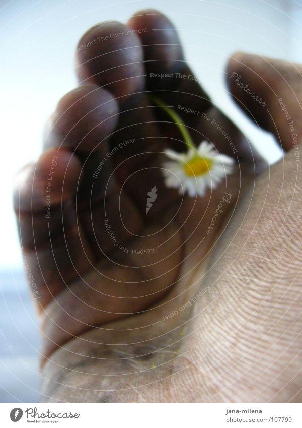 Reifenwechsel I Hand Blume schwarz Frühling dreckig Trauer Macht zart Lebensfreude stark Werkstatt Erdöl Gänseblümchen fein Gegenteil Schwäche