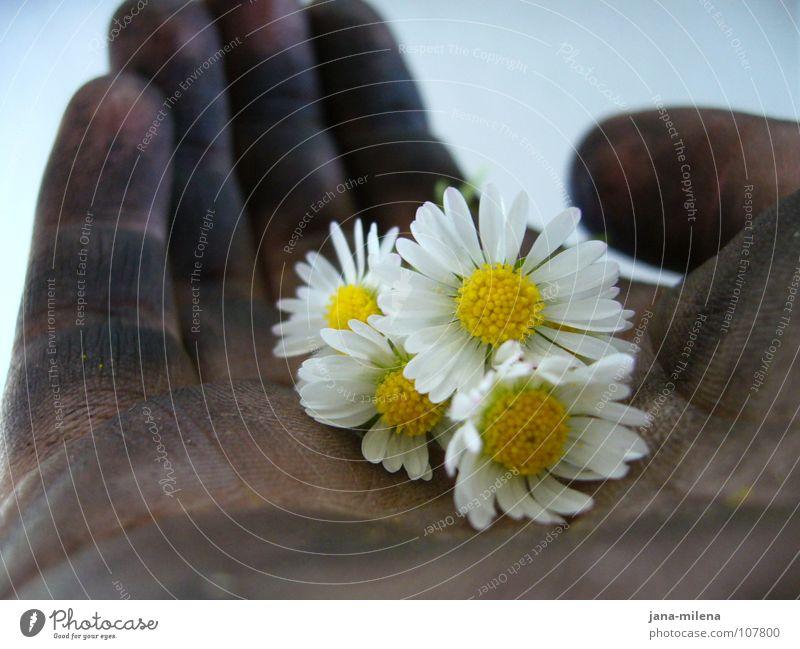 Reifenwechsel II Hand Blume schwarz Frühling Freundschaft Zufriedenheit dreckig Sicherheit Macht zart Vertrauen stark Lebensfreude Gänseblümchen Erdöl