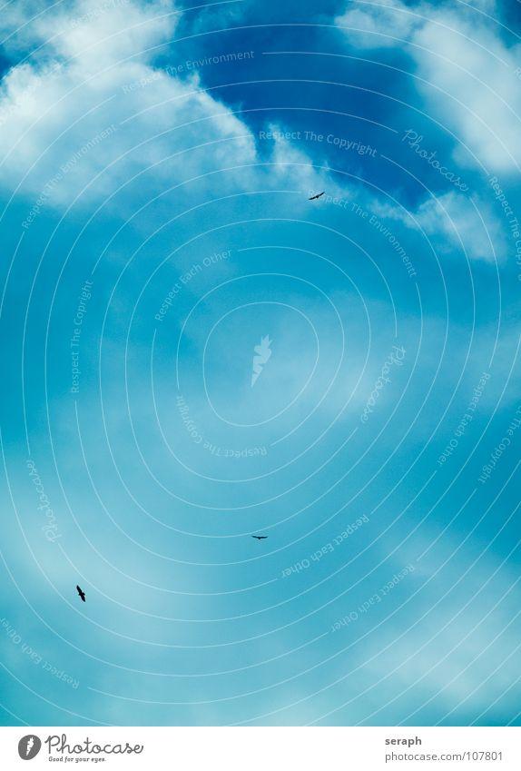 Himmel Himmel blau Wolken Hintergrundbild Menschengruppe fliegen Vogel Luft mehrere Feder Tiergruppe Flügel Abheben fliegend Höhe Schwarm