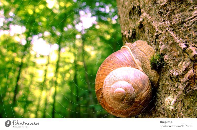 hoch hinaus Nacktschnecken Schneckenhaus braun grün Spirale Baum Baumrinde Wald Baumstamm Makroaufnahme Nahaufnahme Sonne