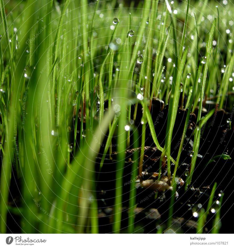 ernte 23 Maulwurf Osterei Gras Grasbüschel Halm Frühling Wachstum Pflanze Nacht Froschperspektive Wiese Wäldchen Sträucher Nachthimmel Vorfreude aufwachen