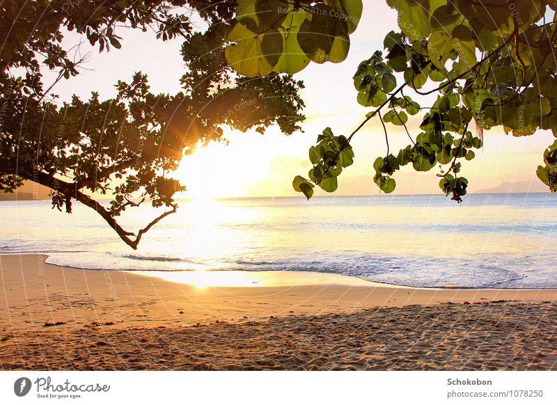 goldene Weite Natur Ferien & Urlaub & Reisen Wasser Sonne Baum Erholung Meer ruhig Ferne Strand natürlich Sand Horizont Energie genießen