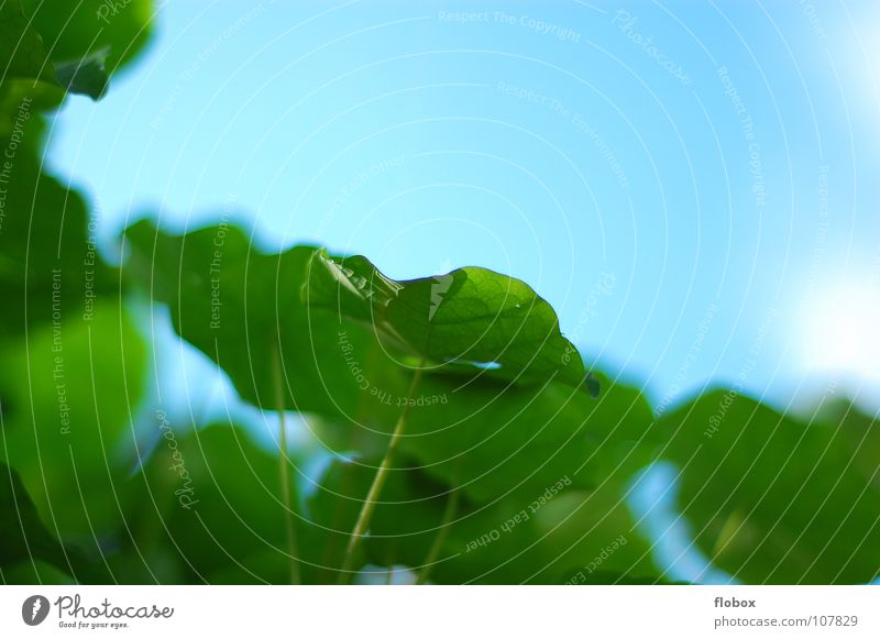 Lieblings... Blatt springen Frühling Natur Himmel Wolken grün Sommer Physik mehrere Pflanze Photosynthese frisch Botanik Pflanzenteile pflanzlich Sträucher nah