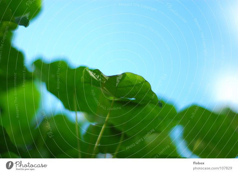 Lieblings... Himmel Natur grün schön blau Sonne Pflanze Sommer Wolken Blatt Leben springen Garten Umwelt Frühling Wärme