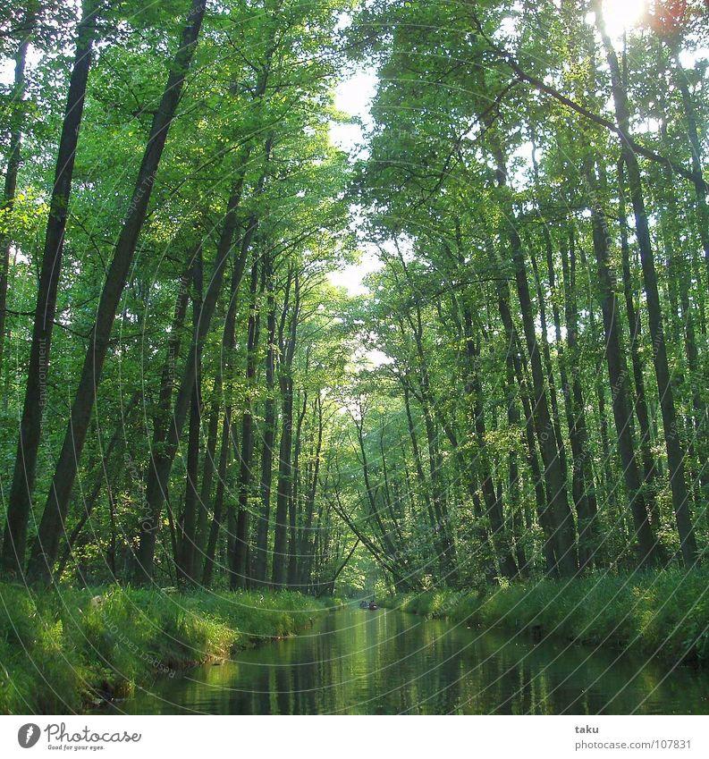 LONELINESS Wasser Baum Sonne Freude Sommer Blatt ruhig Einsamkeit Freiheit Erde Fluss natürlich authentisch Geruch Bach Allee