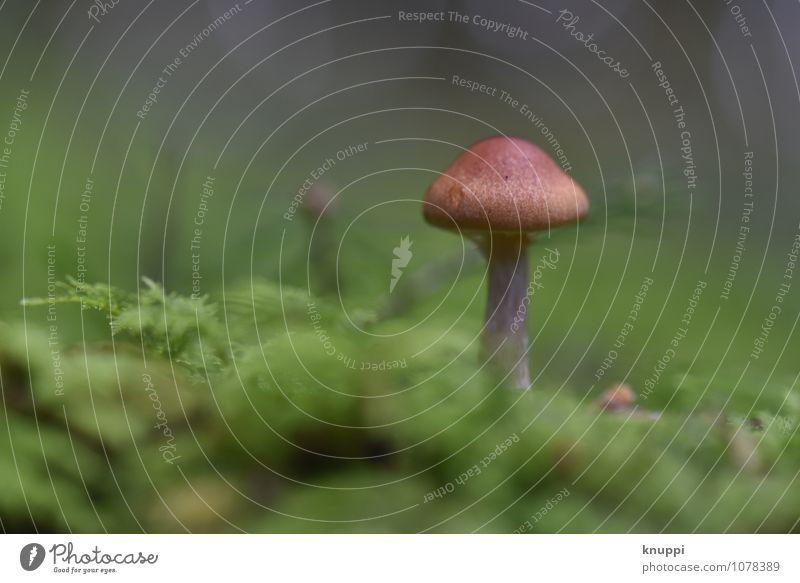 Pilz III Umwelt Natur Pflanze Tier Erde Sonnenlicht Herbst Schönes Wetter Park Wald entdecken Erholung stehen Wachstum außergewöhnlich Duft Gesundheit hell