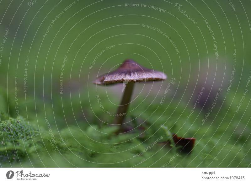 Pilz Natur Pflanze grün schön weiß Tier Winter dunkel Wald schwarz Umwelt kalt Herbst natürlich außergewöhnlich braun