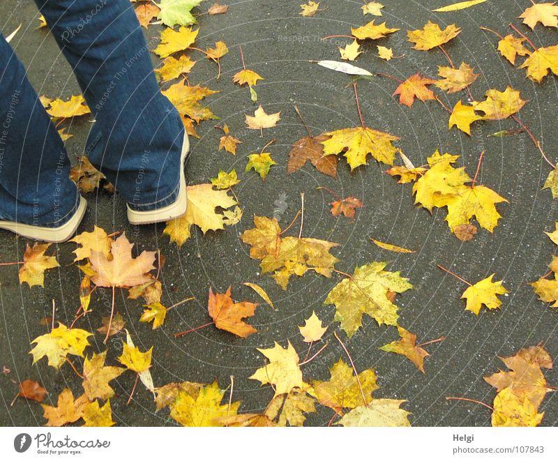 Männerbeine in Jeanshose und Schuhen auf einem Weg mit gelben Herbstblättern Blatt fallen nebeneinander Zusammensein aufeinander Ahorn Ahornblatt Stengel Hose