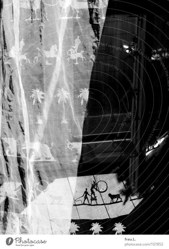 Gardine Palme Artist Peitsche Landraubtier Raum Vorhang Muster Stoff zart Balkontür Sonnenlicht Bodenbelag Holzfußboden Sommer Mittag Sonntag Häusliches Leben