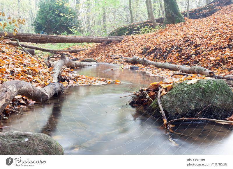 Bachlauf im Herbst Natur Landschaft Pflanze Erde Wasser Nebel Wald Felsen Flussufer Zufriedenheit achtsam Gelassenheit geduldig ruhig Einsamkeit quellenthal