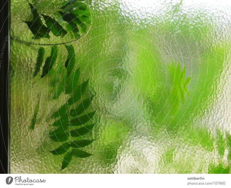Fensterleder {n} = chamois Natur grün Sommer Blatt Garten Landschaft Glas Hintergrundbild Perspektive durchsichtig Fensterscheibe Zweig Gartenbau