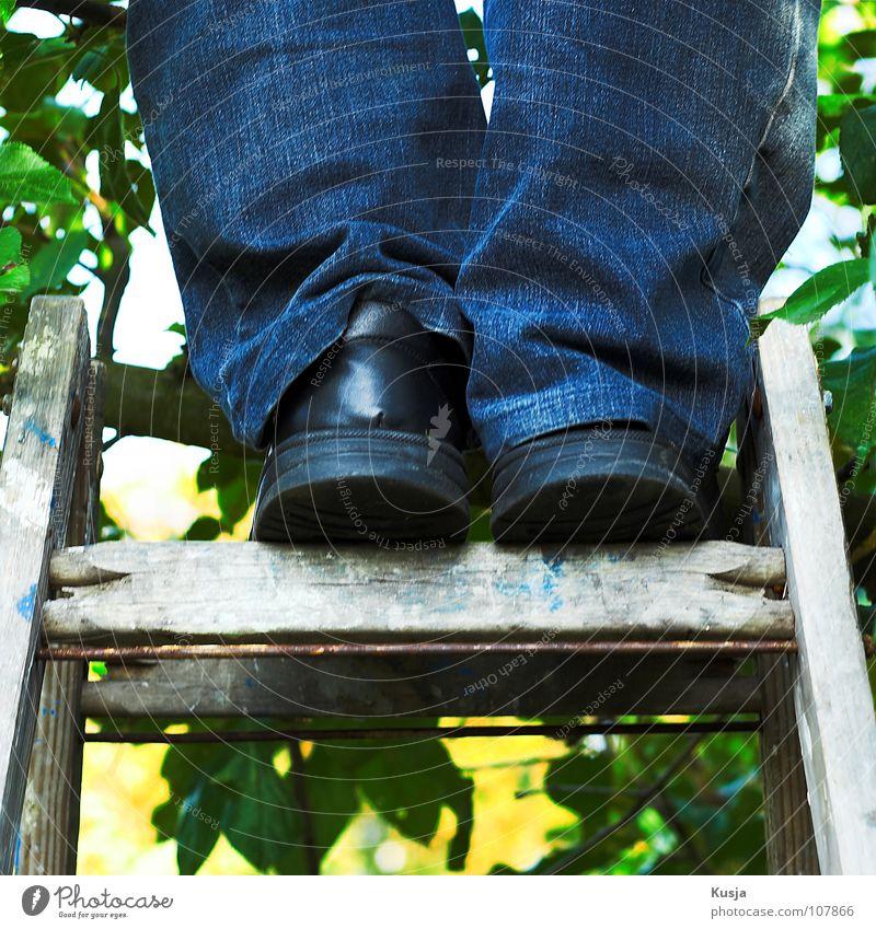 Erntedank Mann grün blau rot Blatt schwarz Herbst Holz Schuhe Klettern Hose lecker Sammlung Leiter Obstbaum