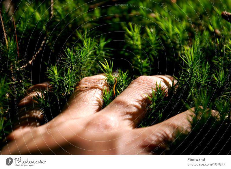 griff ins grüne Gras Baum Hand Handfläche Luft gelb Lunge frisch Nadelwald Fichtenwald Buchenwald weich berühren begreifen Klimawandel Globalisierung Ozon