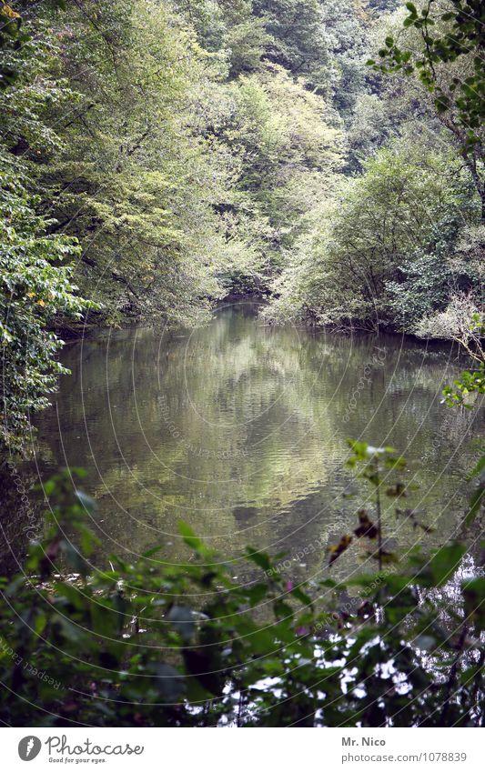 wupper tal Freizeit & Hobby Angeln Ferien & Urlaub & Reisen Tourismus Ausflug Umwelt Natur Landschaft Wasser Pflanze Baum Wald Teich See Fluss natürlich Wupper