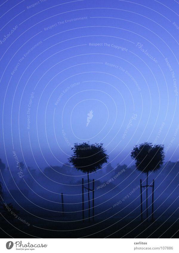 Morgenstille Baum blau ruhig kalt Herbst Wiese 2 Nebel Wetter frisch paarweise feucht Morgennebel Abstufung Nebelschleier Blauton
