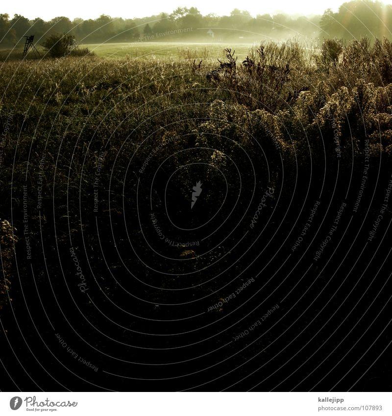 jagdsaison Freude Schnee Erde Erde Arbeit & Erwerbstätigkeit Feld Nebel Wildtier Wassertropfen Bodenbelag Boden lesen Ziel Spuren Landwirtschaft Gastronomie