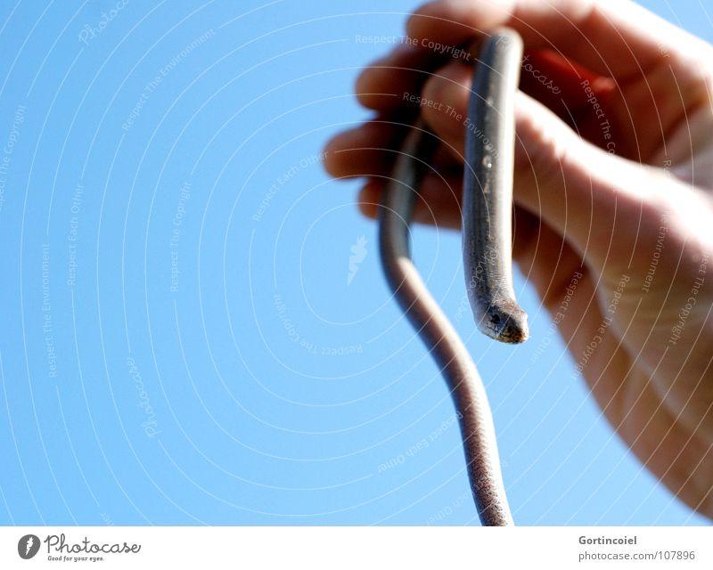Perspektivenwechsel Tier Reptil Echsen Echte Eidechsen züngeln Schlauch Schwanz Nasenloch Blindschleiche Sonnenbad Schüchternheit Luft hochhalten Hand Griff