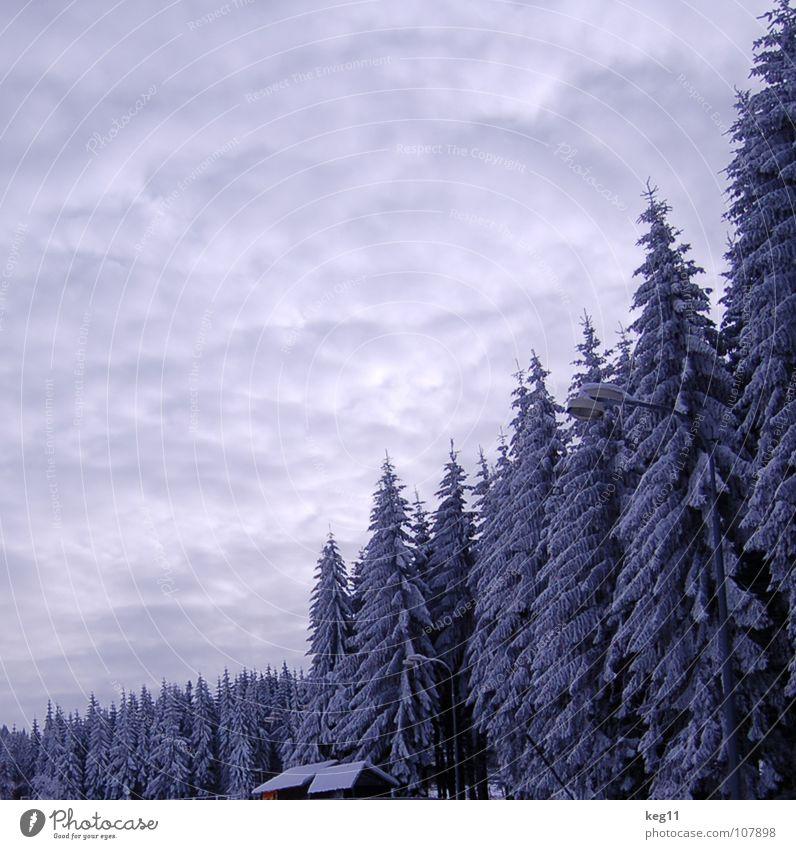 Märchenhaft Himmel schön weiß Baum Freude Winter Wald kalt Graffiti Schnee Spielen Stimmung Ziel Hütte Ende Schweiz