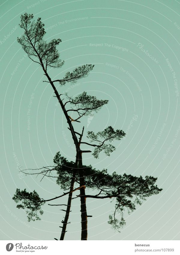 Zuneigung Baum nebeneinander Strebe abstützen Selbstlosigkeit Holzmehl türkis Zusammensein Symbiose Gesellschaft (Soziologie) alt Schwäche im Wald Natur