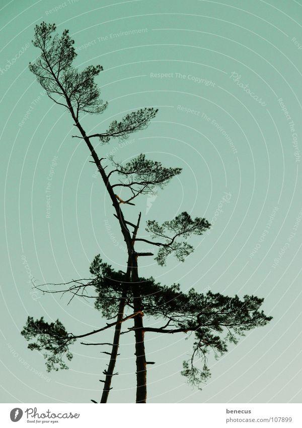 Zuneigung Himmel Natur alt Baum Landschaft Holz Zusammensein Verbindung türkis Gesellschaft (Soziologie) Neigung Zweig Schwäche Strebe abstützen