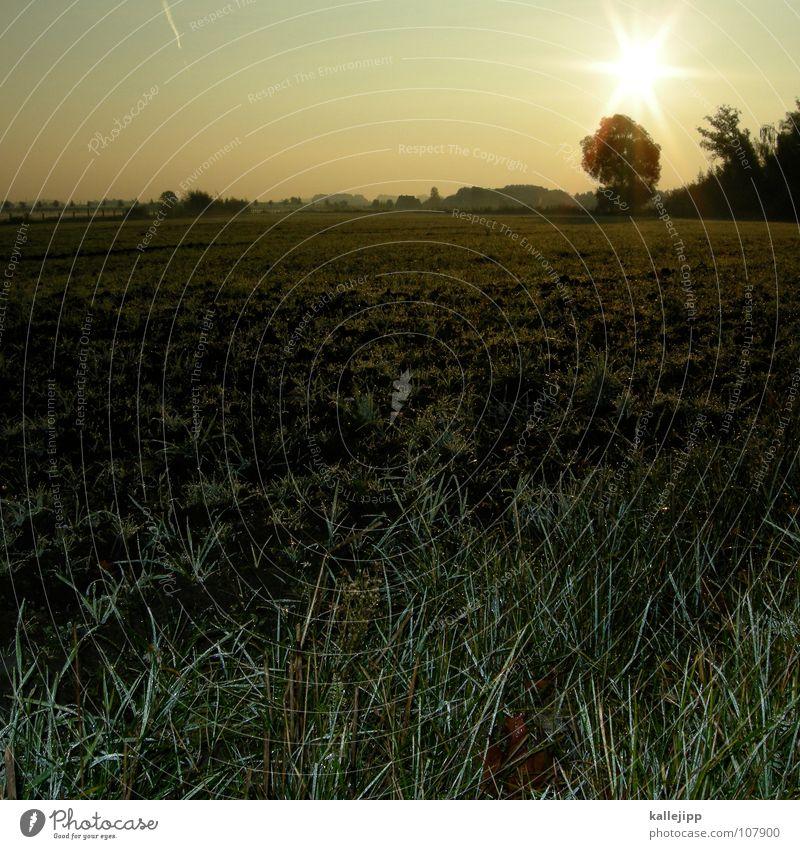 morgengrauen Freude Erde Arbeit & Erwerbstätigkeit Feld Nebel Wildtier Wassertropfen Bodenbelag lesen Ziel Spuren Landwirtschaft Gastronomie Bauernhof