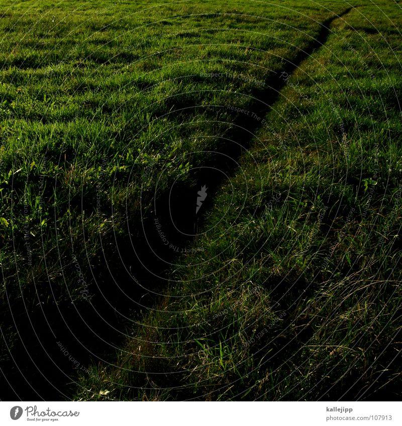 trampelpfade Freude Wiese Wege & Pfade Erde Erde Arbeit & Erwerbstätigkeit Feld Nebel Wildtier laufen wandern Wassertropfen Zukunft Bodenbelag Boden lesen