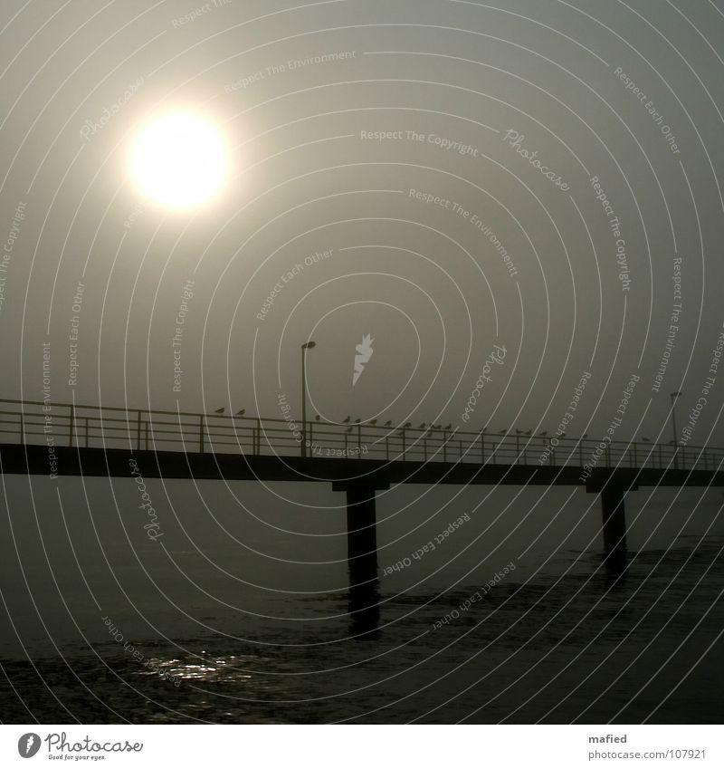 Der Weg zum anderen Ufer Wasser Sonne Strand ruhig schwarz Einsamkeit grau Küste Brücke Frieden Geländer Möwe friedlich Hongkong Morgennebel Ferry Terminal