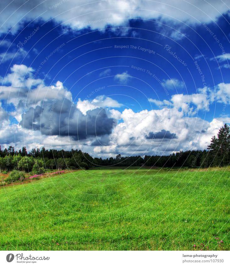 Im Land der Elche Himmel Natur blau grün Baum Ferien & Urlaub & Reisen Wolken ruhig Wald Ferne Erholung dunkel Landschaft Wiese Gras Frühling