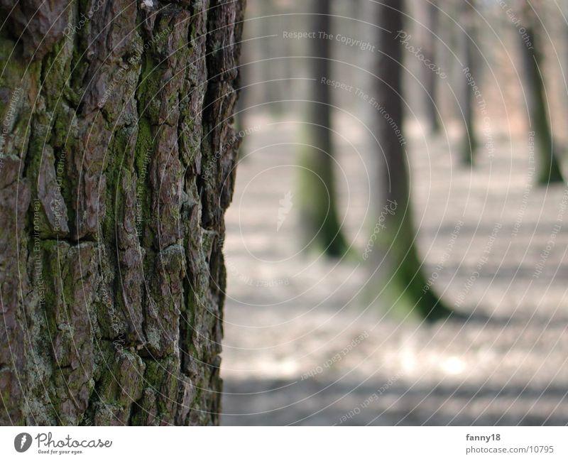 Die Baumrinde Wald Makroaufnahme Natur