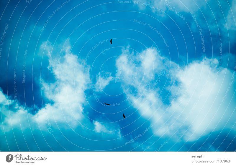 Vogelflug Himmel blau Wolken Hintergrundbild Menschengruppe fliegen Luft mehrere Feder Tiergruppe Flügel Abheben fliegend Höhe Schwarm